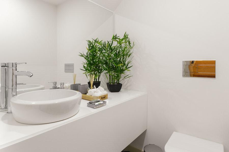 Rostliny v koupelně – jaké vybrat, aby zdobily interiér?